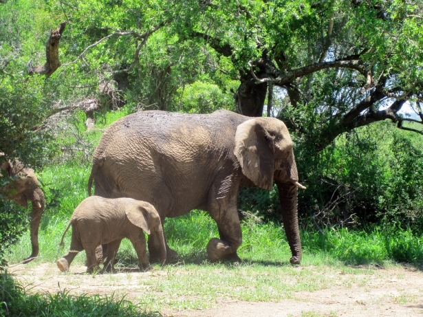mom_and_baby_african_elephant.jpg